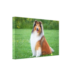 Rough collie dog beautiful photo canvas print