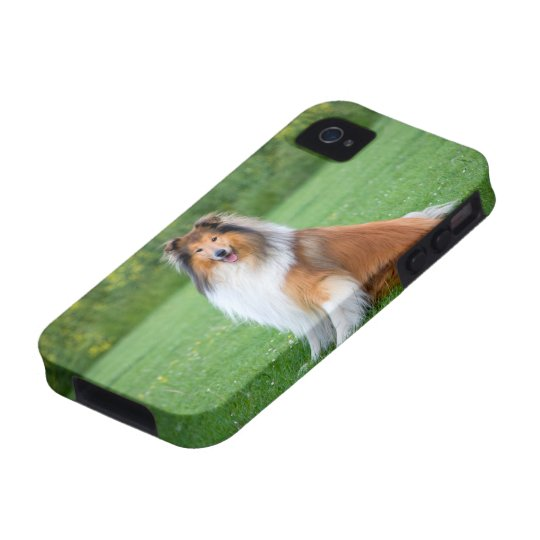Rough Collie dog beautiful photo iphone 4 case