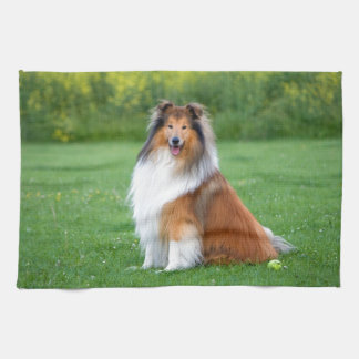 Rough Collie dog beautiful photo kitchen towel
