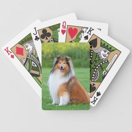 Rough Collie dog beautiful photo portrait Deck Of Cards