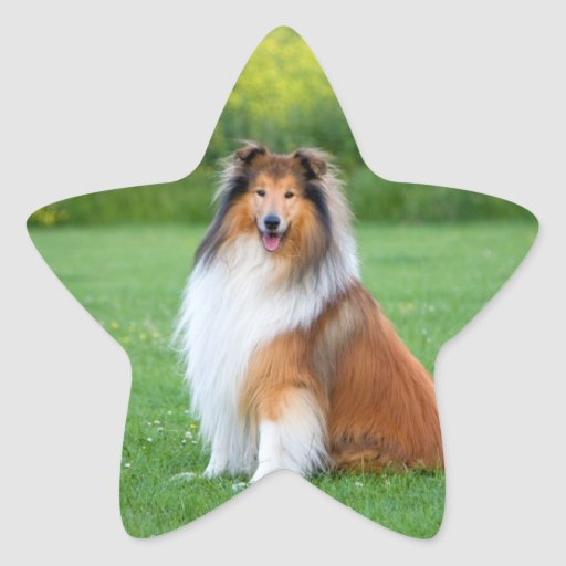 Rough Collie dog beautiful photo star stickers