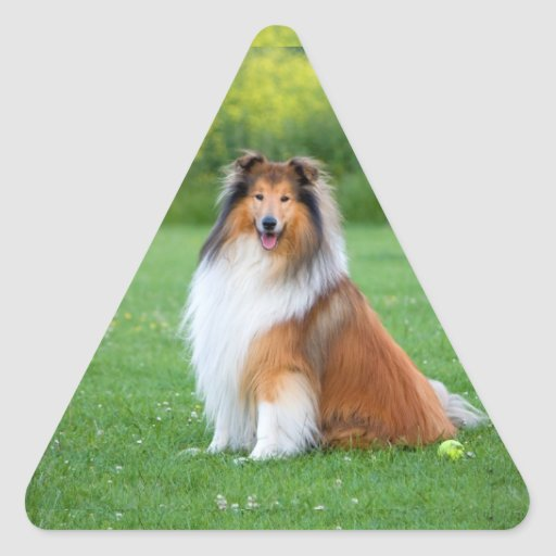 Rough Collie dog beautiful photo triangle stickers