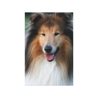 Rough collie dog beautiful photo wrapped canvas