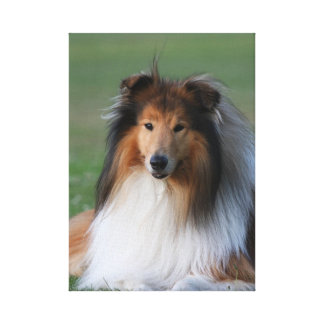 Rough collie dog beautiful photo wrapped canvas canvas print