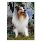 Rough Collie dog blue merle, blank greeting card