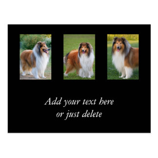 Rough Collie dog lovers photo custom postcard