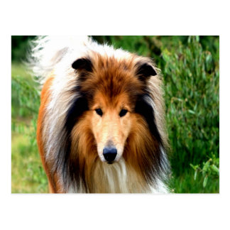 rough collie dog move to love postcard