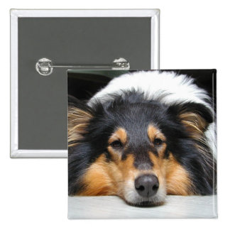 Rough collie dog nose beautiful photo button, pin