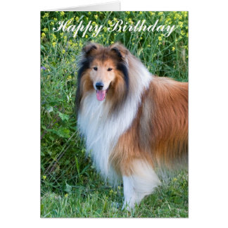 Rough Collie dog portrait happy birthday card