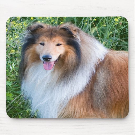 Rough Collie dog portrait mousepad, present idea