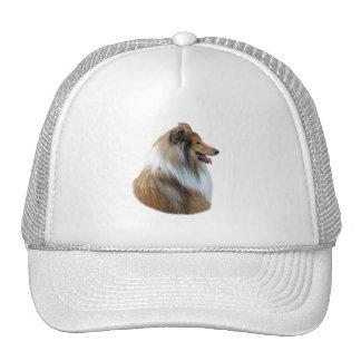 Rough Collie dog portrait photo Cap