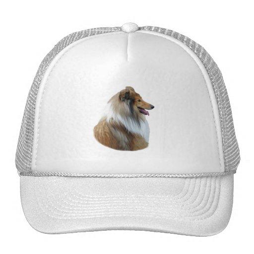 Rough Collie dog portrait photo Hat