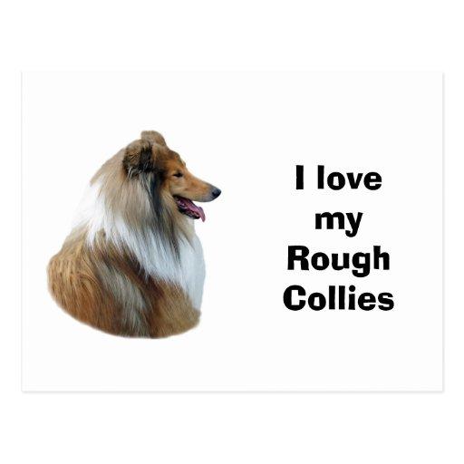 Rough Collie dog portrait photo Post Cards