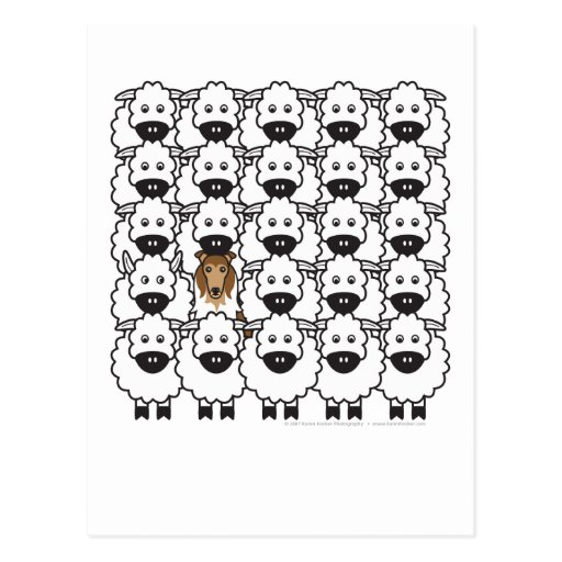 Rough Collie in the Sheep Post Cards
