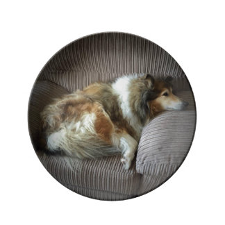 Rough collie on armchair plate