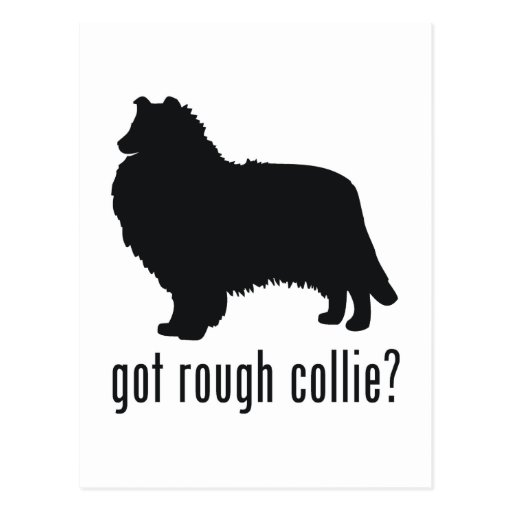 Rough Collie Post Cards
