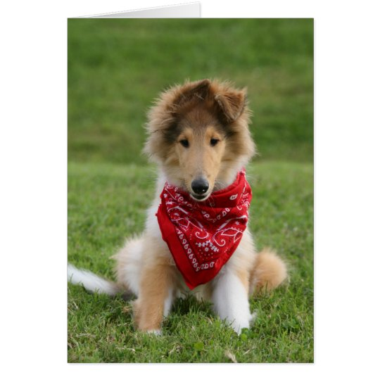 Rough Collie puppy dog blank greeting card