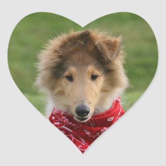 Rough collie puppy dog cute beautiful photo heart sticker