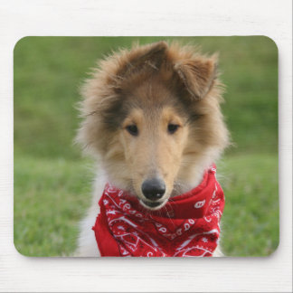 Rough collie puppy dog cute beautiful photo mouse mat