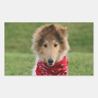 Rough collie puppy dog cute beautiful photo stickers