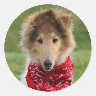 Rough collie puppy dog cute beautiful photo round stickers