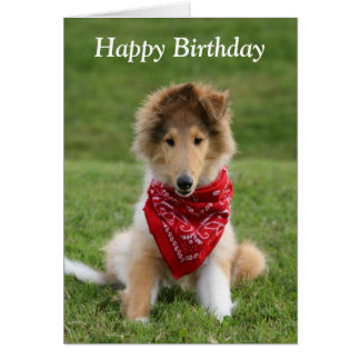 Rough collie puppy dog cute photo birthday card