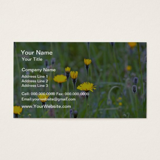 Rough hawkbit (Leontodon Hispidus) flowers Business Card