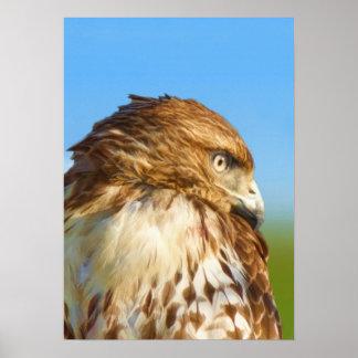 Rough-legged Hawk Bird Poster