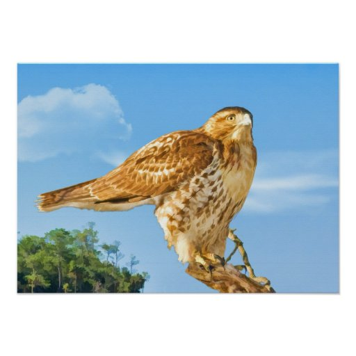Rough-legged Hawk Print
