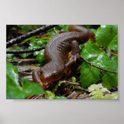 rough-skinned newt print