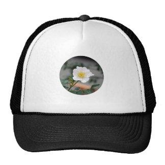ROUND around Mesh Hat