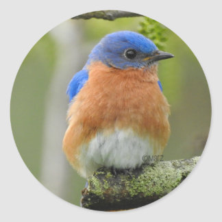 Round Bluebird Stickers