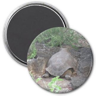 Round Giant Tortoise Magnet
