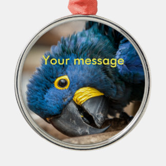 Round ornament with cute Hyacinth Macaw parrot