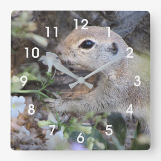 Round Tail Ground Squirrel Smelling the Flowers Square Wall Clock