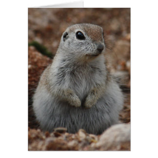 Round-tailed Ground Squirrel Greeting Card