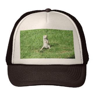 Round-tailed Ground Squirrel Mesh Hats