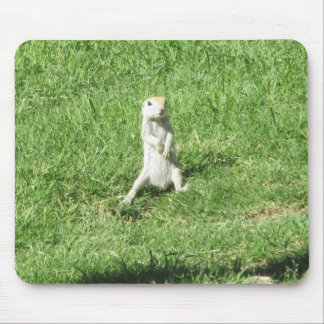 Round-tailed Ground Squirrel Mouse Pad