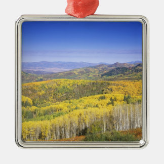 Routt National Forest in Autumn color, near Christmas Ornament