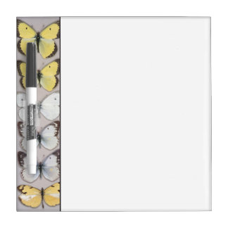 Row of butterflies dry erase board
