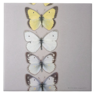 Row of butterflies large square tile