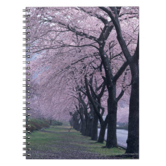 Row of cherryblossom trees notebook
