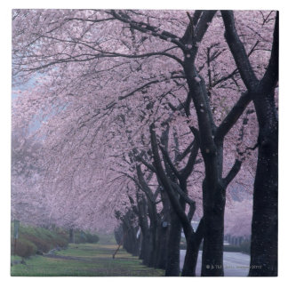 Row of cherryblossom trees tile