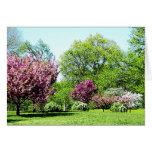 Row of Flowering Trees
