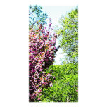 Row of Flowering Trees Photo Cards