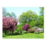 Row of Flowering Trees Post Card