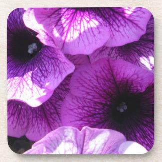 Row of Purple Petunias Beverage Coaster