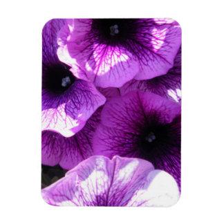Row of Purple Petunias Flexible Magnet