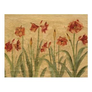 Row of Red Amaryllis Postcard