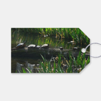 Row of Turtles Green Nature Photo Gift Tags